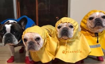 狗为什么一淋雨就很臭