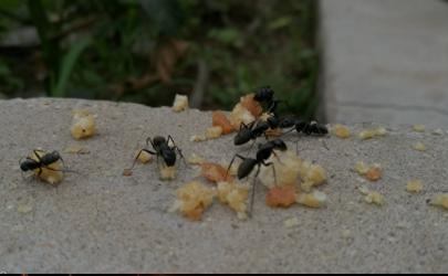 为什么蚂蚁咬一口就肿还痒