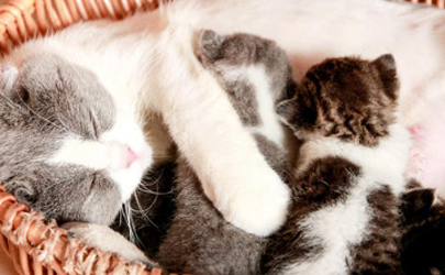 刚满月的小猫不喝奶怎么办