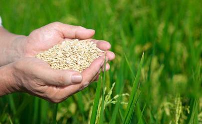 2020下半年会出现饥荒吗