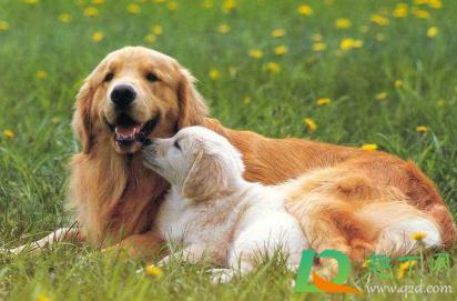 狗狗感冒可以带出去玩吗1