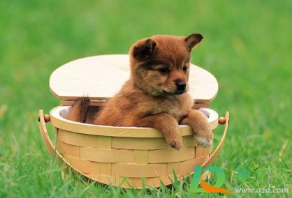 狗狗感冒可以带出去玩吗2