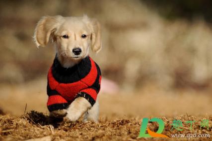 狗狗感冒可以带出去玩吗3