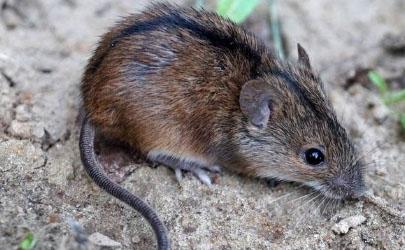 老鼠咬了不打针有事不