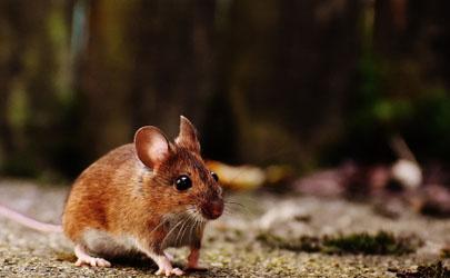被老鼠咬了怎么办