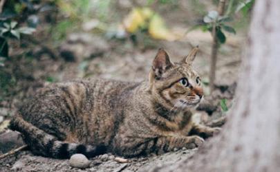 网上养猫赚钱是真的吗月入过万