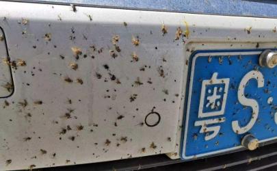 跑完高速车头蚊虫怎么去除