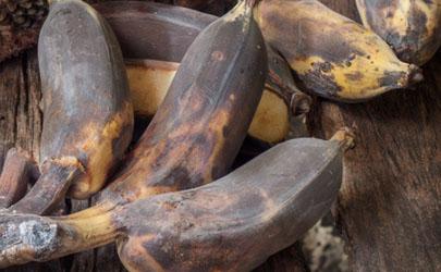 坏了的香蕉可以做花肥吗