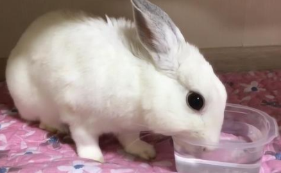 兔子喝水怎么喂