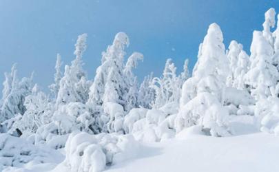 2020年冬天雪量大不大
