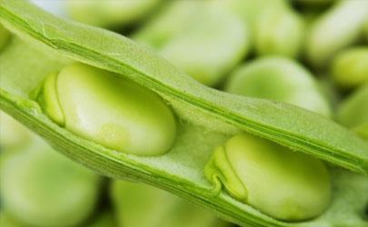 蚕豆做花肥料要经发酵吗
