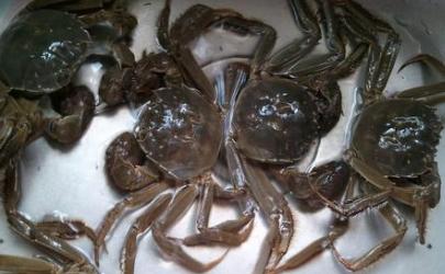螃蟹怎么清洗不被夹手