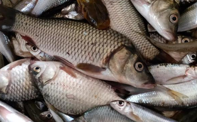 秋天钓鱼为什么难钓