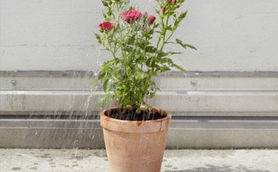 阳台养花打农药会中毒吗