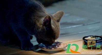 猫除了猫罐头什么都不吃怎么办4