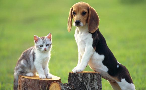 女生一个人独居养什么宠物好