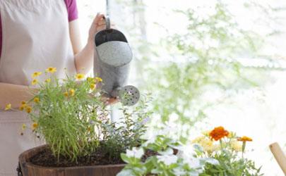 營養液噴葉和澆土哪個好