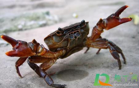 螃蟹上岸是要地震了么1