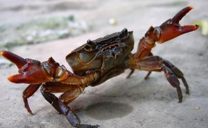 螃蟹上岸是要地震了么