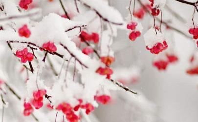 武漢12月份哪天有雪2020