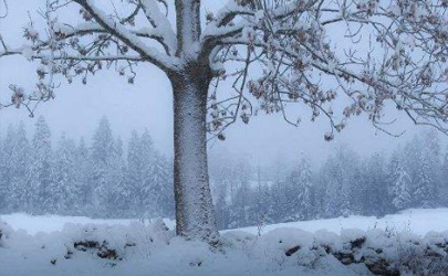 2021數九天最冷是幾九