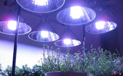 植物補光燈能促進開花嗎