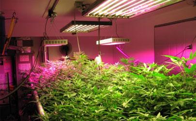 植物補光燈什么顏色的比較好