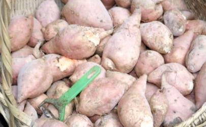 红薯放哪里不容易烂