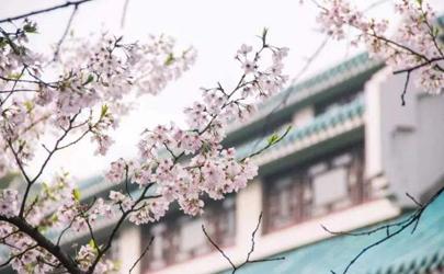 2021年武大樱花节会取消吗