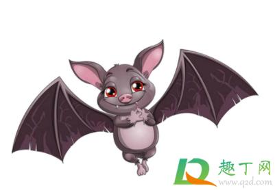 怎么驱赶蝙蝠在家里插图1