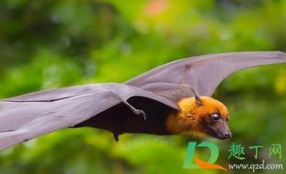 怎么驱赶蝙蝠在家里插图2