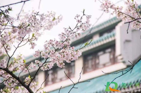 2021武汉4月份还有樱花吗插图2