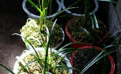 用水苔养花有什么好处