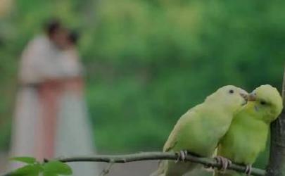 鸟替什么梗