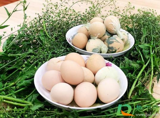荠菜煮鸡蛋用什么样的荠菜3