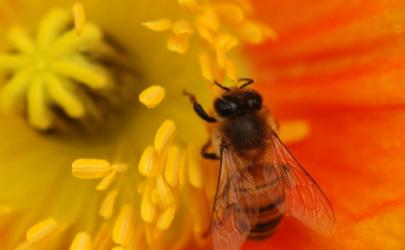 没接触花粉为什么会过敏