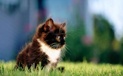 猫咪猫藓会自己好吗