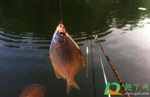 偷钓鱼被报警有什么后果3