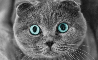 猫咪益生菌可以用酸奶代替吗