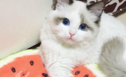 猫夏天不开空调会热吗