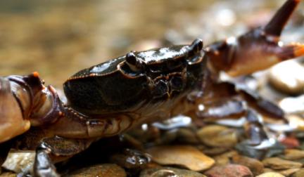 螃蟹是不是高嘌呤食物插图2