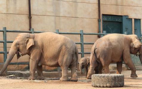 2021云南大象迁徙的原因2