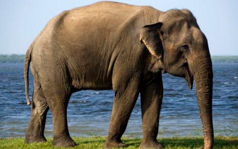 2021云南大象迁徙的原因3