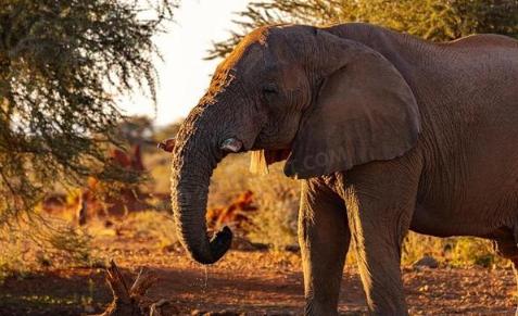 2021云南大象迁徙的原因1