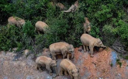 大象会不会主动攻击人2