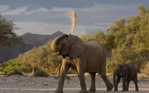 大象会不会主动攻击人3