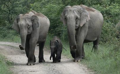 云南大象迁徙是说明未来天气越来越热吗