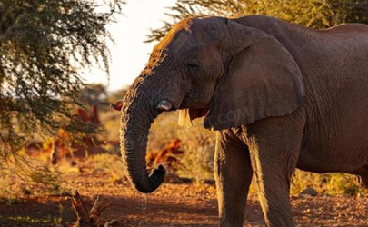 2021云南大象迁徙的原因