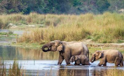 大象会不会主动攻击人