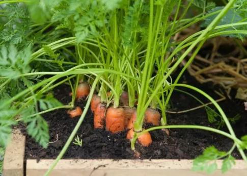盆栽蔬菜怎么杀虫插图